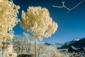 arbre et panorama